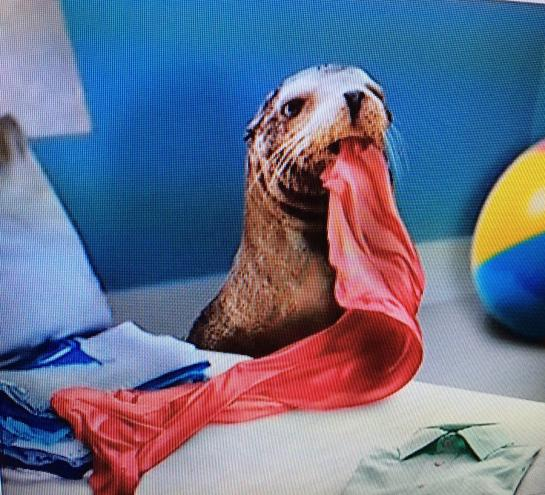 CIRCUS SEAL FOLDING LAUNDRY